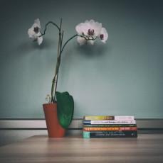 Flowers / Books